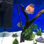 Rafflesia Throwback Discus photo review